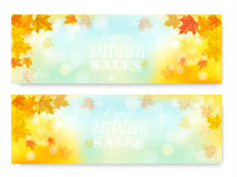 Enjoy Autumn Sales Banners with Colorful Leaves. Stock Photos