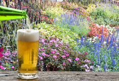 Enjoy beer in flower garden. Royalty Free Stock Photos