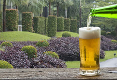 Enjoy beer in garden. Royalty Free Stock Photo