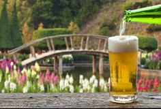 Enjoy beer with Japanese flower garden. Stock Image