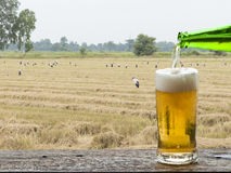 Enjoy beer with rice field landscape. Stock Photos