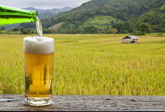 Enjoy beer with rice field landscape. Royalty Free Stock Photo
