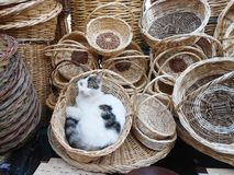 Enjoy the cat in wicker basket Stock Photos