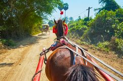 Enjoy the fast ride in horse-drawn cart, Ava. Enjoy the fast ride in horse-drawn cart along the countryside road of Ava, surrounded by jungle forests and royalty free stock photos