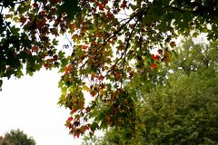 Look Up. Enjoy the first day of Autumn. Not many leaves change. Excited to see more color coming soon royalty free stock images