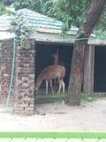 Animal tour with Family royalty free stock photos