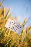 Enjoy life. White card with Enjoy life sign in wheat field. Prosperity and happiness concept Royalty Free Stock Images