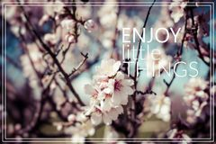 Enjoy Little Things. Cherry blossom. Royalty Free Stock Images