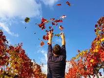 Enjoy person in the autumn Royalty Free Stock Photos