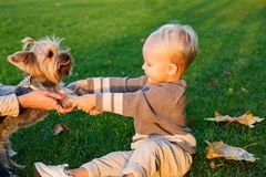 Enjoy the play with your friend. Real Children`s emotions. Beautiful little kid playing with her yorkshire terrier in stock photography