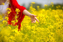 Enjoy and relax in nature. Hand touching yellow flowers Royalty Free Stock Images