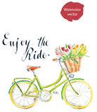Enjoy the ride. Watercolor hand drawn bicycle - vector Illustration Royalty Free Stock Photos