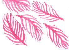 Pink Palm Beaches Watercolor Leaves. Enjoy the summer with this fun pink palm beach leaves watercolor vector illustration