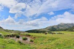 Enjoy view of nature around Qingtiangang Grassland in Yangmingshan mountain. Stock Images