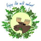 Enjoy The Wild Nature Stock Image