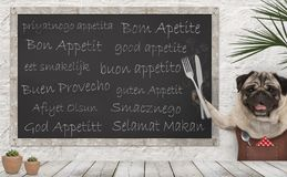 Free Enjoy Your Meal - Blackboard With Good Appetite In Multiple Languages With Happy Smiling Pug Puppy Dog With Fork And Knife Cutlery Stock Photo - 159192740