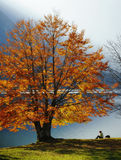 Enjoying autumn Royalty Free Stock Images