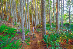 Enjoying the Forest Trail Royalty Free Stock Images
