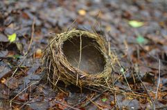 The nest lies on the graund. royalty free stock images