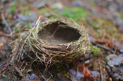 The nest lies on the graund. stock images