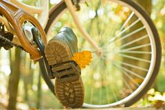 Enjoying good autumn weather. Fall concept. Riding the bicycle in the park. Active people. Outdoors. Autumn tree leaves. And vinrage bike royalty free stock photo