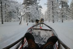 Enjoying a husky ride during winter in the Arctic snow royalty free stock photo