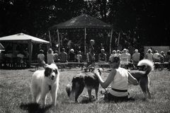 Enjoying some music. Woman and her dogs enjoying some music stock photography