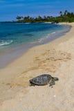 Enjoying a sunny beach Stock Image