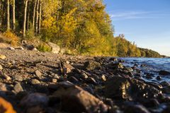 Enjoying the Swedish nature. A little walk along one of Sweden`s biggest lake. This is so close to the city stock images