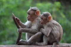 Enjoying together monkeys Stock Photography