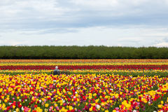 Enjoying The Tulips Stock Images