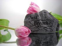 Enkel adem stock foto's