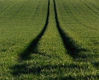 Enkel bestrooid sleutelkoord van gras stock afbeeldingen