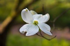 Enkel blom Arkivfoton