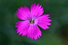 enkel blomma Royaltyfri Fotografi