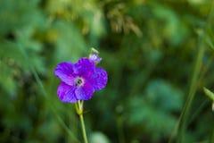 enkel blomma Royaltyfri Bild
