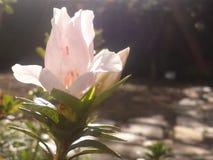 Enkel blomma för bakgrund Royaltyfri Bild