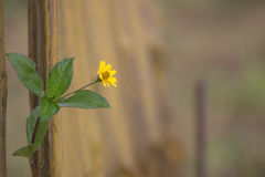 Enkel blomma i parkera Arkivbild