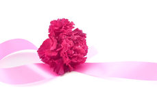 Enkel blomma, rosa nejlika med det rosa bandet på vit Fotografering för Bildbyråer