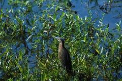 Enkel fågel på vatten royaltyfria bilder
