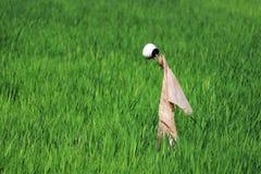 Enkel fågelskrämma i ett risfältfält Arkivbilder
