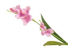 Enkel filialblomning-växt med rosa färgblomman Arkivfoto