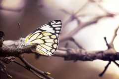 Enkel fjäril som sitter på en filial royaltyfri foto