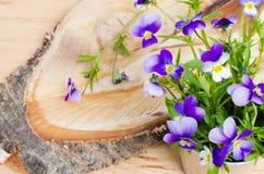 enkel Geregend Boeket van de lentebloemen op een besnoeiingsboom Kaart met de lentebloemen Royalty-vrije Stock Foto
