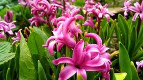 enkel Geregend Roze bloemen Open plek van bloemen It& x27; s de lente De stemming van de lente royalty-vrije stock foto