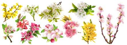 enkel Geregend Van de de boomkers van de bloesemsappel de peer van de het takjeamandel Royalty-vrije Stock Foto