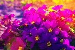 enkel Geregend Zonlicht op de bloemen stock fotografie
