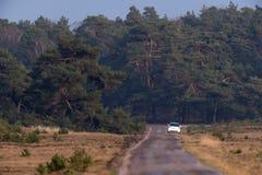 Enkel grändväg med den vita bilen på vägrenen i naturreserv royaltyfri fotografi