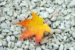 Enkel gul leaf Royaltyfria Bilder
