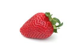 enkel jordgubbe Fotografering för Bildbyråer